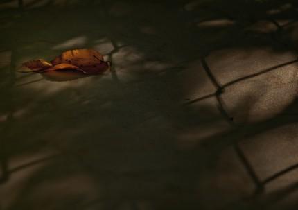 Podzimní 1