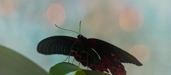 Křídla motýlů