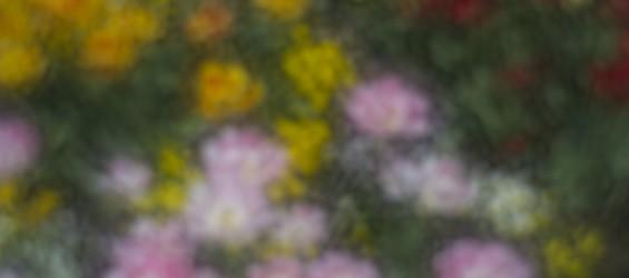 Malování v Botanické zahradě