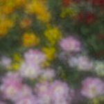 20170430_botanicka_0026 copy