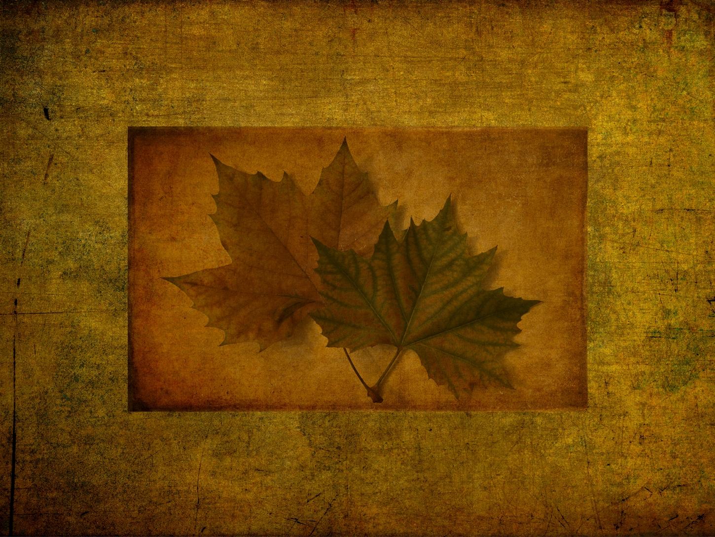 Listy stromů kolem nás